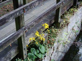 Nishi_gawa_flower_weeds